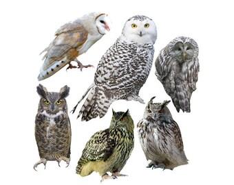 Owl overlay photo animal photoshop png