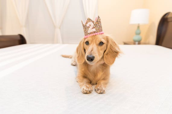 Pet Birthday Crown    Dog Crown   Pet Pig Cat Kitty Puppy People Birthday Hat    Pet Photo Prop    Dog Gift    Add Any Number