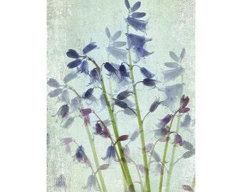 Blue Bells Botanical Print, Shabby Chic Decor, Vintage Inspired Print, Floral Art Print, Flower Wall Art