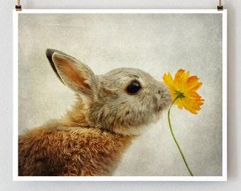 Rabbit nursery photo print, easter bunny, zen art, nursery art print, kids room decor
