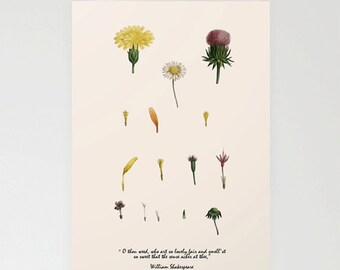 Nature in art card, keepsake card,  botanical card, Greetings card, hand made card, artist card,birthday card, nature card