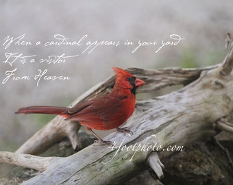 When a cardinal appears in your yard it's a visitor from heaven ~ photo wall art, customizable, framed option is available!