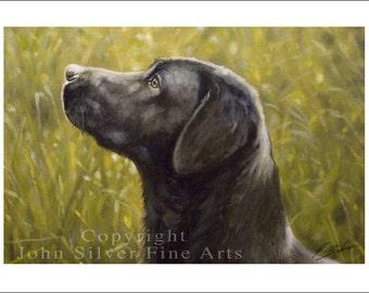 Black Labrador Dog Portrait by award winning artist JOHN SILVER. Personally signed A4 or A3 size Print. BL001SP