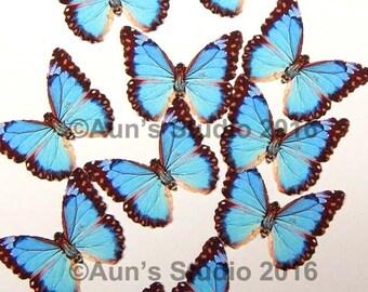 Paper Butterflies, Realistic 1 inch Paper Butterflies - 12 Mini Blue Morpho Butterfly