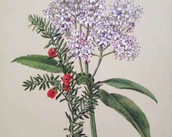 SALE Vintage botanical flower drawing print (No.1)