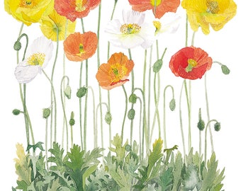 Icelandic Poppies and Daises Watercolour Print
