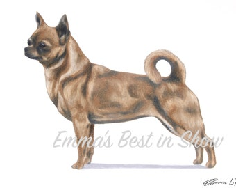 Smooth-Coated Chihuahua Dog - Archival Fine Art Print - AKC Best in Show Champion - Breed Standard - Toy Group - Original Art Print
