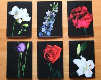 Limited Edition Set of Photographic Flower Cards