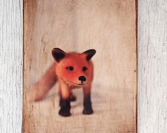 Toy Fox Art/Photo - Wall Art 4x6