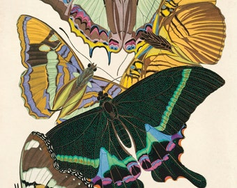 Vintage Butterfly Illustration Print Reproduction. French Seguy Plate 8 Variety of Butterflies Chart Diagram Poster. Entomology CP273