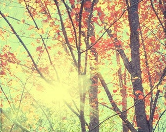 Autumn Photography,  Landscape Photography, New England Fall Fine Art Print, Red Woodland Art Print, Rustic Decor