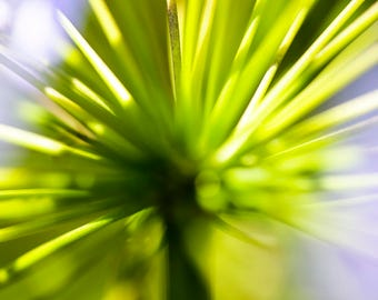 Abstract green plant leaves colour photographic print