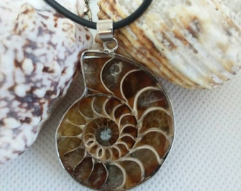 Ammonite necklace, Fossil jewelry, Nautilus shell necklace, ammonite shell fossil pendant, Nautilus jewelry, choose your fossil
