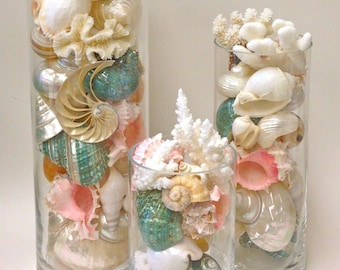 "Beach Decor - Seashells, Coral and Starfish in Glass Cylinders  8"", 12"" and 16"""