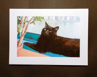 Black Cat Stationery Gift Set, Blank Note Cards, Greeting Cards,  Cat Card, Photo Notecards, Deborah Julian