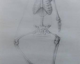 Human skeleton Original Skull Drawing Academical Anatomy  Vintage Pencil  Dark Tone Pictur Gift  Classical Sculpture