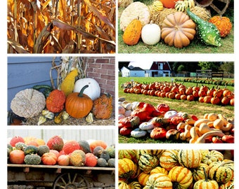 6 Autumn Photos Instant Download Photo Bundle Fall Pumpkins Squash Corn Stalks Antique Farm Wagon Amish Farm