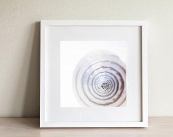 Sea Shell / 1281cyst / Nautical Art / Shell Print / Fine Art / Wall Art / Shell Art / White Art / Digital Download / Printable Art