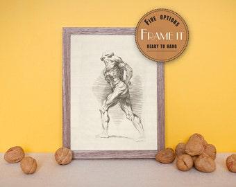 VVintage illustration by Leonardo da Vinci of a dynamic male muscle figure - framed art of anatomy  FREE SHIPPING - 158