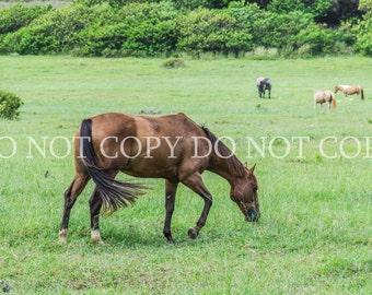 Digital Backdrop Background Farm Horses Hawaii