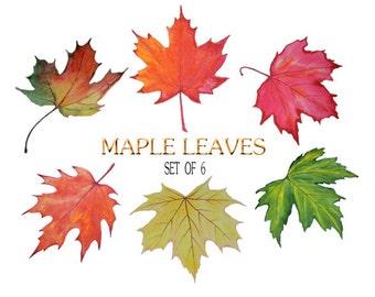 SALE Clip Art Watercolor Maple leaf clip art Stock image Autumn leaf digital image Floral Watercolor collage sheet