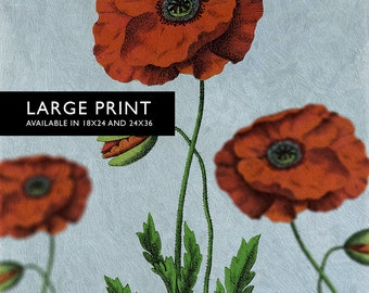 Poppy decor art Flower botanical Poppy print kitchen decor Floral Poppy print wall decor floral wall art Large Giclee Cotton Canvas & Satin