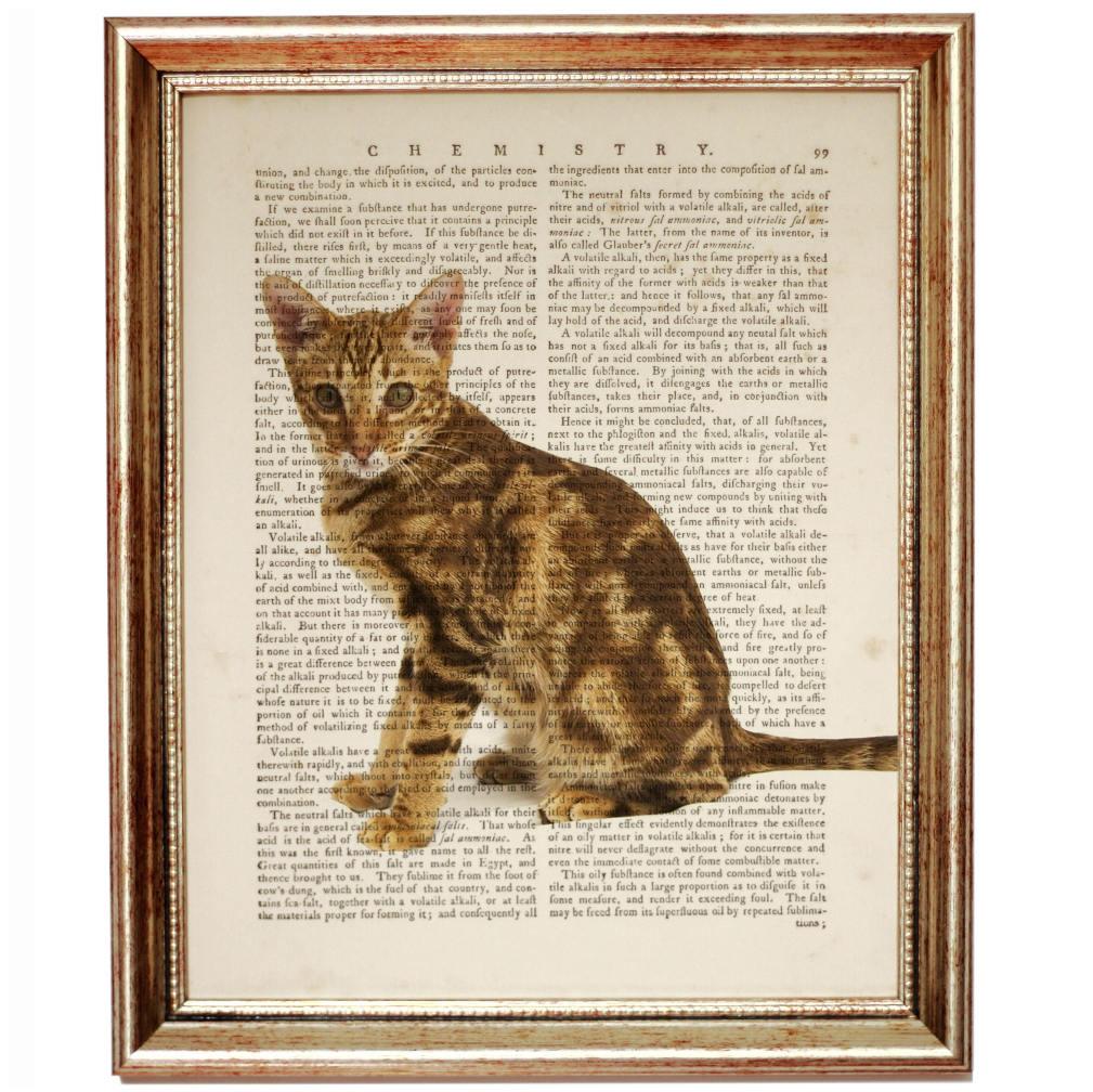 Großartig Katze Inneren Organe Diagramm Zeitgenössisch - Menschliche ...