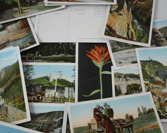 Haynes Yellowstone National Park Colored Post Cards