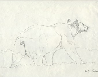 Grizzly Bear Pencil Study - Original Wildlife Drawing by Darin Miller