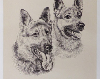 German Shepherd Dogs -    Dog vintage print 1970  -  11.2 x 13 inches - A11