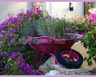 Pink wheelbarrow 30X40cm picture in the middle of the bougainvillea