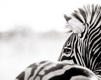Zebra Fine Art Photography - Wildlife Art - Modern Wall Art - Black and White Photo - Monochrome Wild Animal - Zebra Room Decor