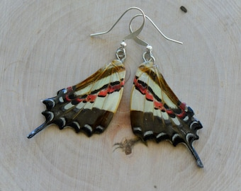 1 Pair REAL Orange and White Butterfly Wing Earrings Preserved in Resin - Nature Earring Insect Charm