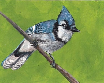 Aceo Cute Chicks series Blue Jay Limited Edition aceo