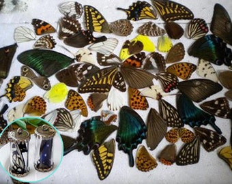 2PCS real butterfly wing authentic butterfly wing nature butterfly, for Earring arts, crafts and jewellery making