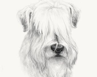 Print - Wheaten sketch 2
