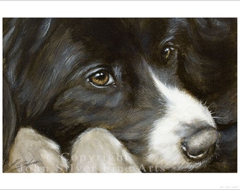 Border Collie Dog Portrait by award winning artist JOHN SILVER. Personally signed A4 or A3 size Print. BC266SP