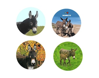 Donkey Magnets:  4 Dapper Donkeys for your home, your collection,  or to give as a unique gift