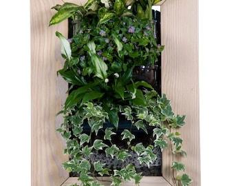 Biovertigo Wood Vertical Garden Kit