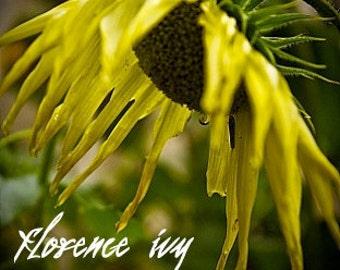 Sunflower Fine Art Photography Autumn