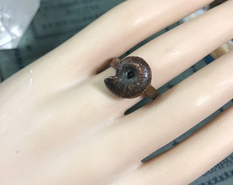 Electroform Ammonite Fossil Shell Copper Ring | Plus Size Statement Ring | Sz  9 1/2 | Boho Mermaid  STORE CLOSING SALE