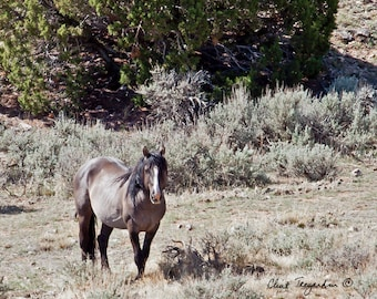 Wild Stallion, Fiero Original Fine Art Photography
