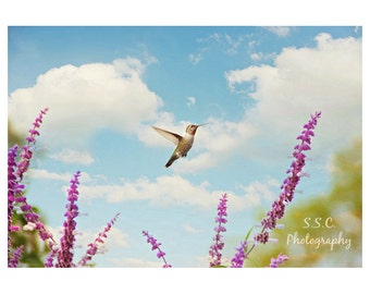 Hummingbird Photography. Spring. Blue Sky. Colorful Photography. Nursery decor. Bird art. Floral. Blue purple green. nature