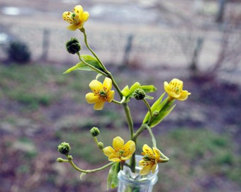 home decor - artificial meadow buttercup plant, wildlife flowers, wildflower