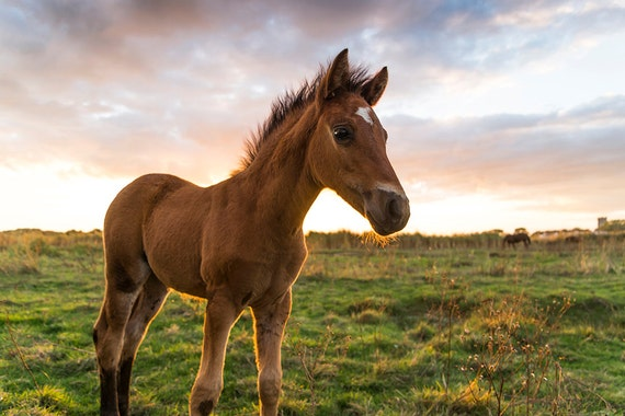 Young Foal, horse art, equine art, photographic print, Dorset, limited edition print