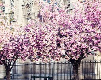 Cherry blossom art, Paris photography, extra large wall art, Paris wall art, framed wall art, mothers day gift, wall art canvas art, print