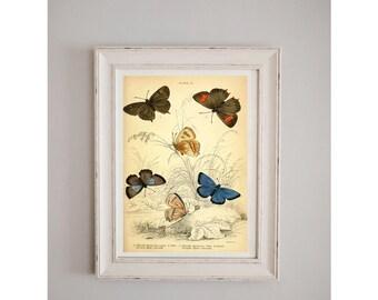 1840's Butterflies Collection Print // Antique Nature Journal // Wall Art