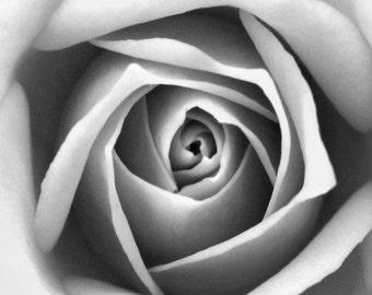 Impression noir et blanc Rose se ferment à la photographie - fine art photo macro nature jardin mur décoration gris doux