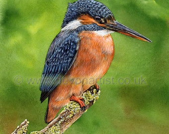 Kingfisher painting, giclee print, Bird Paintings, Watercolour Giclee Print