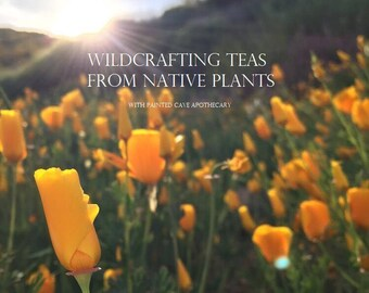 Wildgathering Workshop & Tea Ceremony